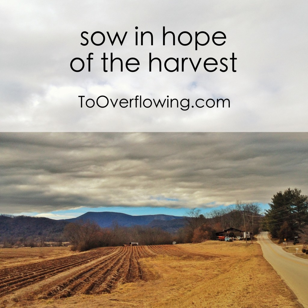 sow in hope